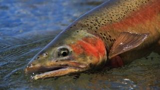 In Our Time - Jensen Fly Fishing