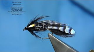 Tying a Blue Jay Matuka Fly by Davie McPhail