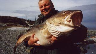 Lov tresek v Norsku