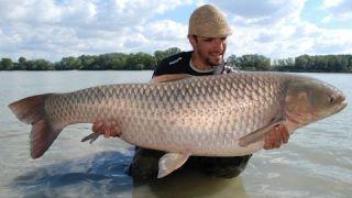 LK Baits - Dunaj - Můj velký příběh - Třetí výprava, životní amur