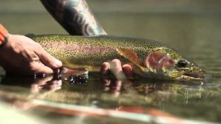FLY FISHING & FISHING FLIES , INSPIRED BY NATURE, DRIVEN BY PASSION, STU'S SUPERIOR FLY DESIGN STORY